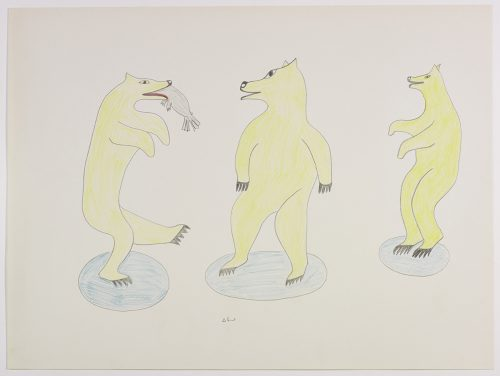 Three polar bears standing upright on their hind legs. The polar bear on the left has a fish in its mouth. Presented in a two-dimensional style and using yellow, blue, red and blue.