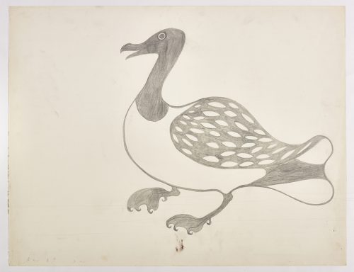A loon with webbed feet and a spotted wing. Presented in a two-dimensional style and using grey.